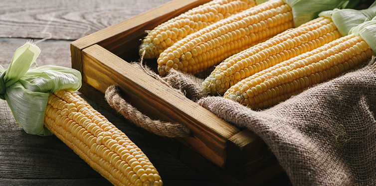 ripe corn cobs in box