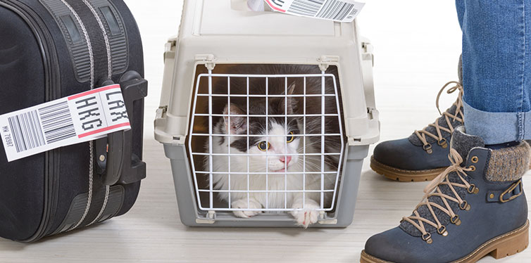 Cat in a Cat Carrier