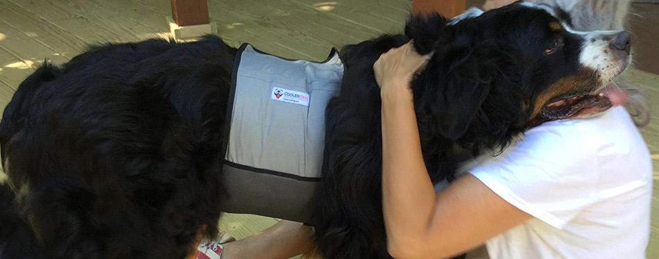 Cooler Dog Cooling