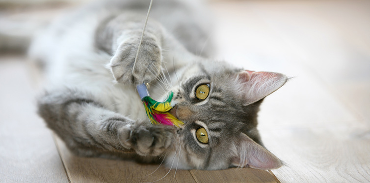 cat playing with feather-and-string cat wand