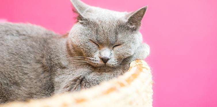 cat sleeping in cat bed