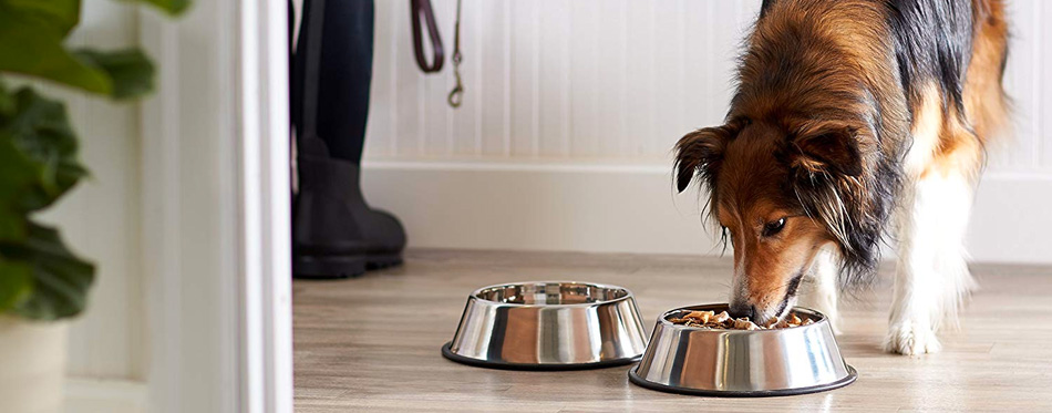 dog eating from food bowl