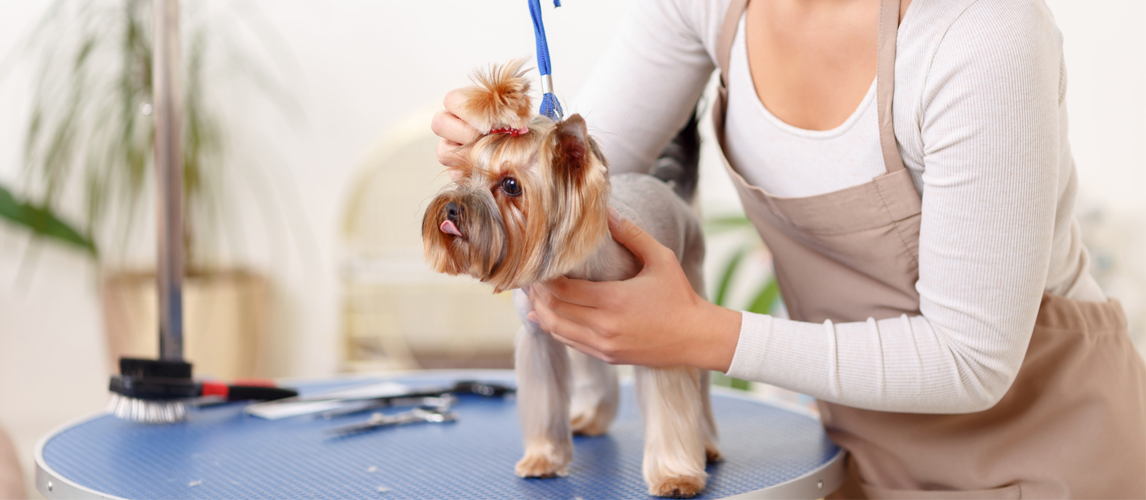 The Best Dog Grooming Tables (Review) in 2019 | Pet Side