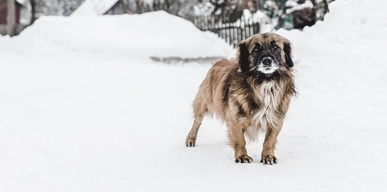 dog in the winter
