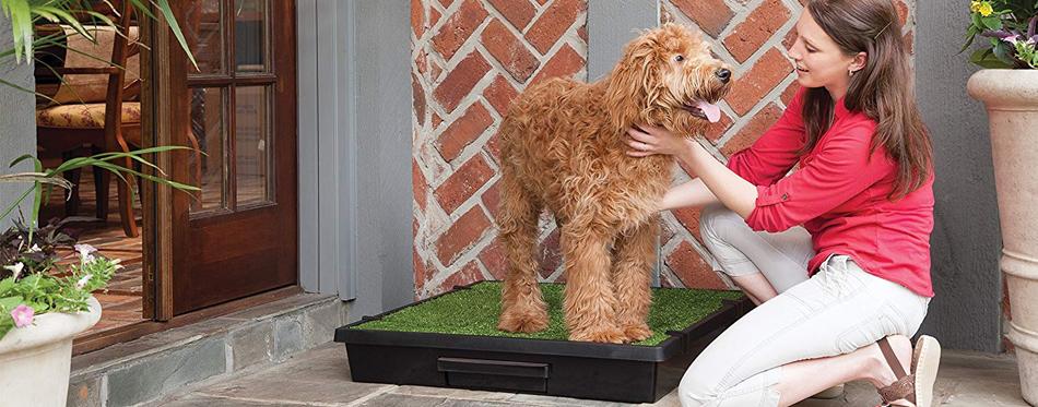 dog potty
