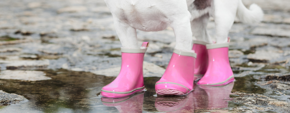 dog rubber boots