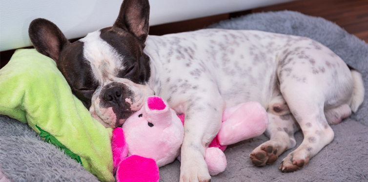 dog sleeping with a toy