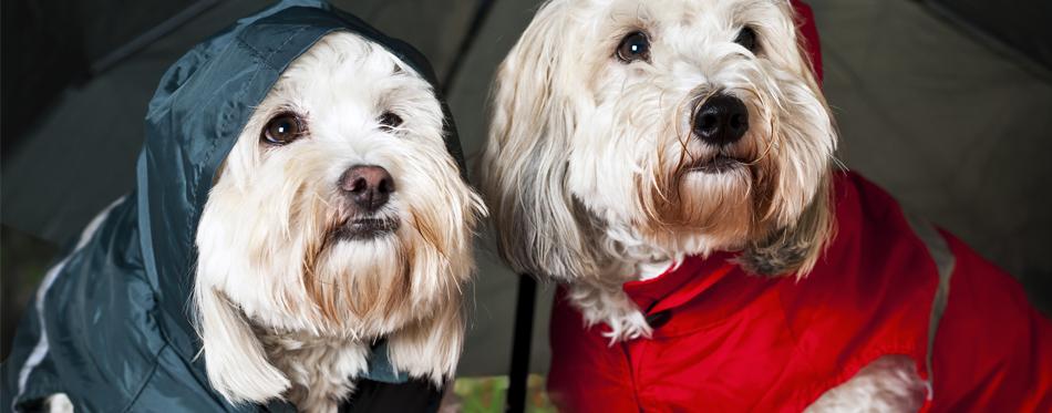 dogs wearing raincoats