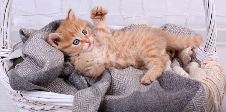 kitten relaxing in basket