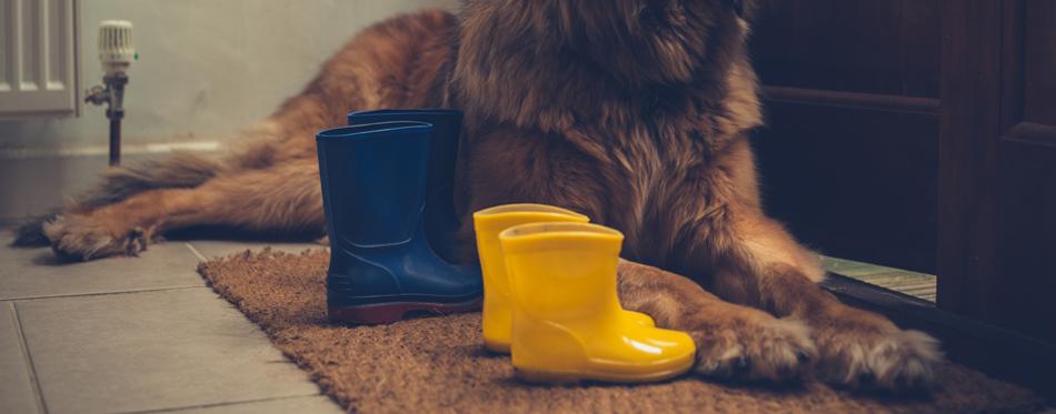 pet boots