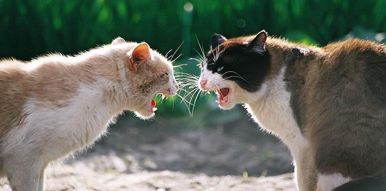 Aggressive Cats