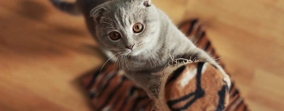 Cute cat sharpening claws
