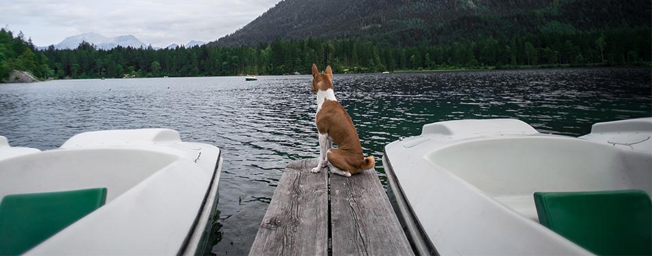 Cute dog waits on pier on alpine lake