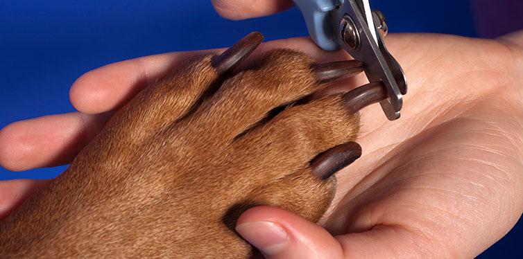 Cutting dog nail