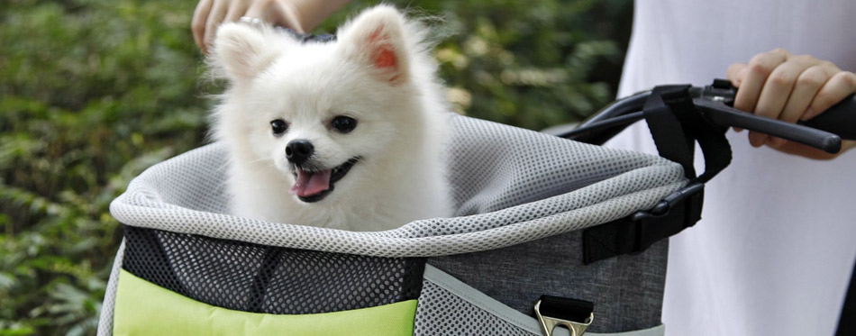Dog Baskets