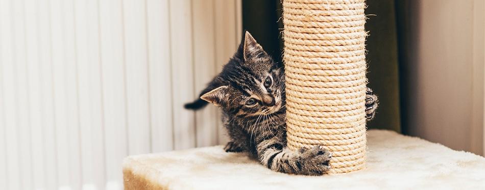 Feisty little kitten