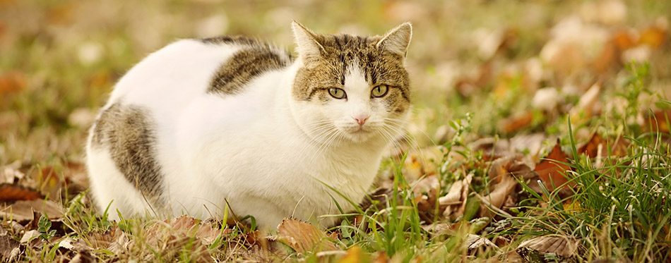 Portrait of a cat in park