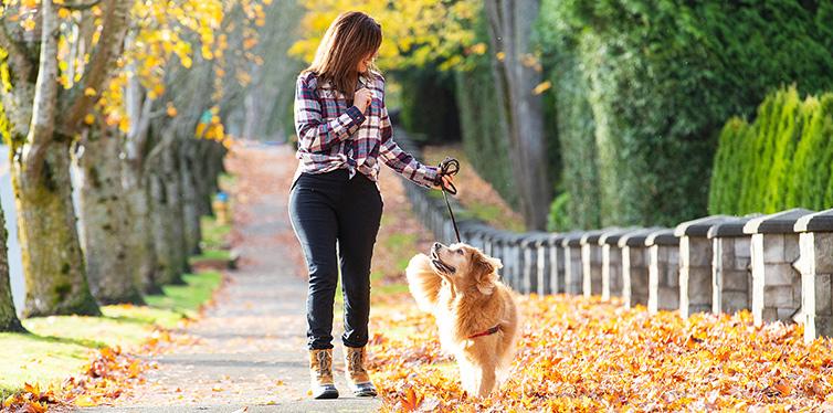 Woman walking golden retriever dog
