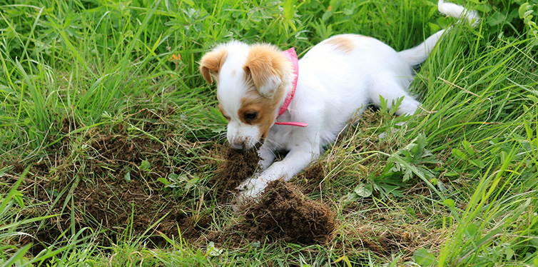 Young dog digging on a meadow