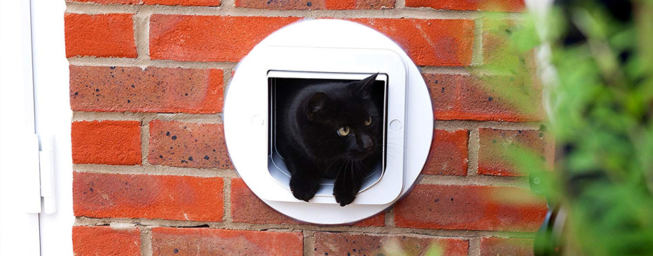 black cat in cat door