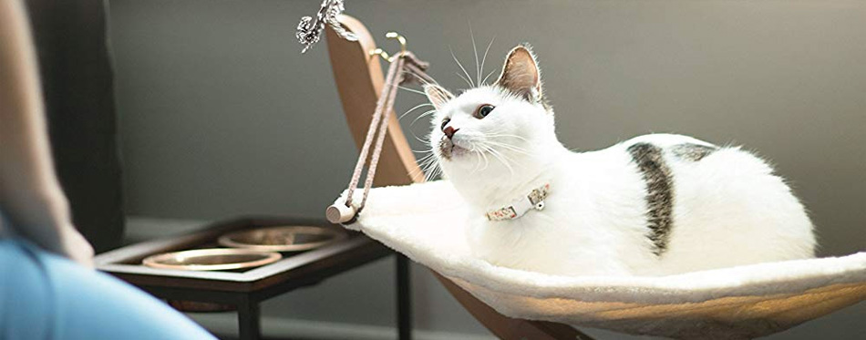 cat in the hammock
