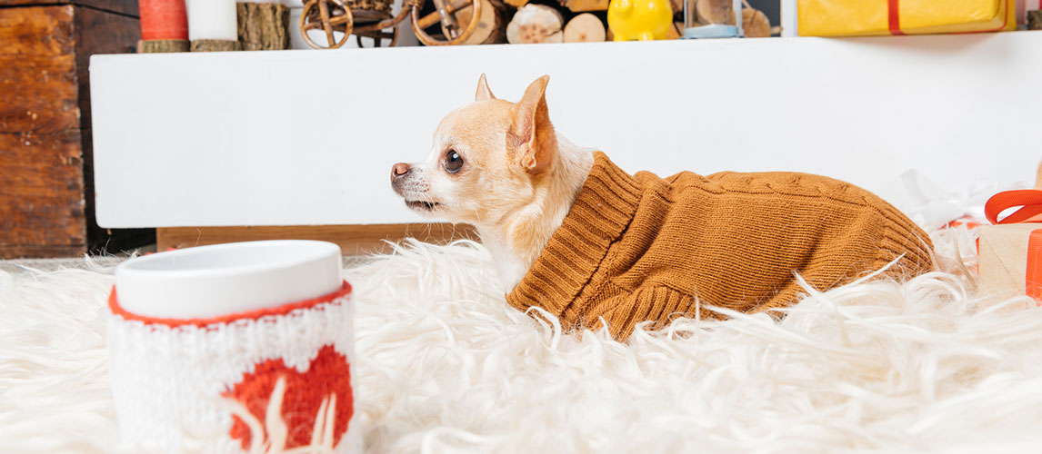 The Best Dog Sweaters (Review) in 2020