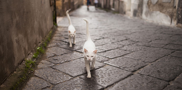 Cats walking on street