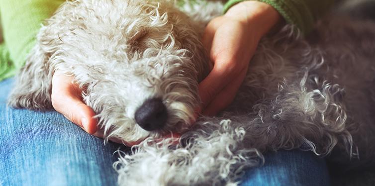 Cute sleeping dog
