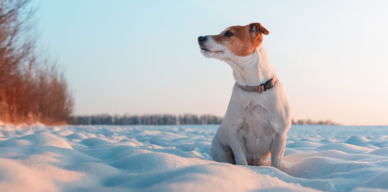 Feist Puppy on Snow
