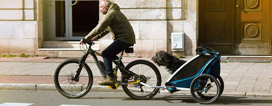 Itizen transports dog on Bicycle