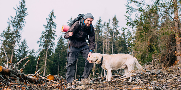 Man hiking in wood with labrador dog