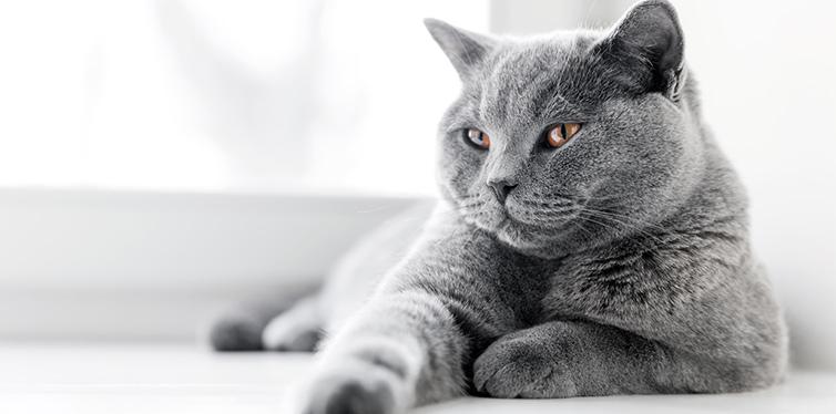 Noble proud cat