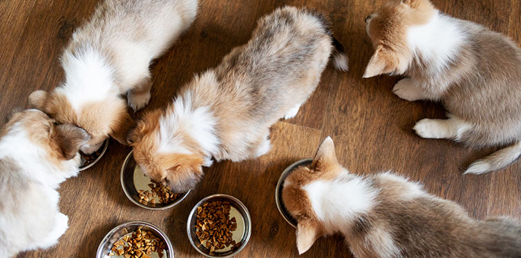 Puppies Eating Food Kitchen Bowls