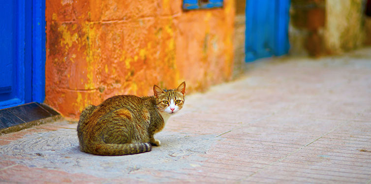 Stray tabby cat on a street of Essaouira