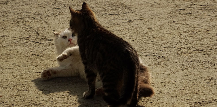 Two Fighting Kittens Outdoor