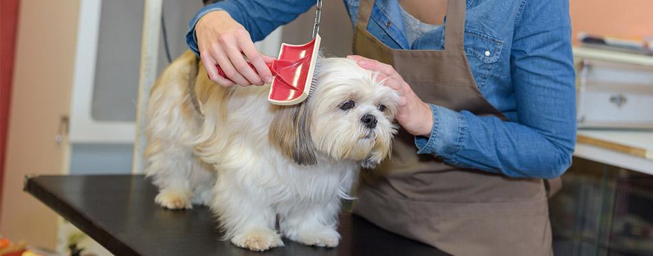 Woman grooming pet dog