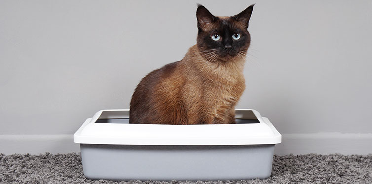 cat sitting in litter box