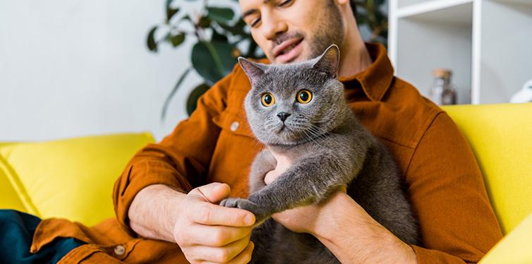 smiling man with british shorthair cat sitting on sofa