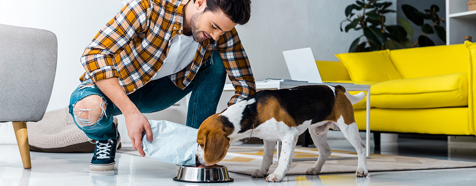 man feeding cute dog in living room at home