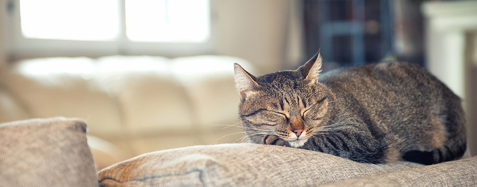 Cat relaxing on couch