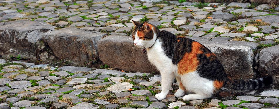 Collar cat sitting on the road