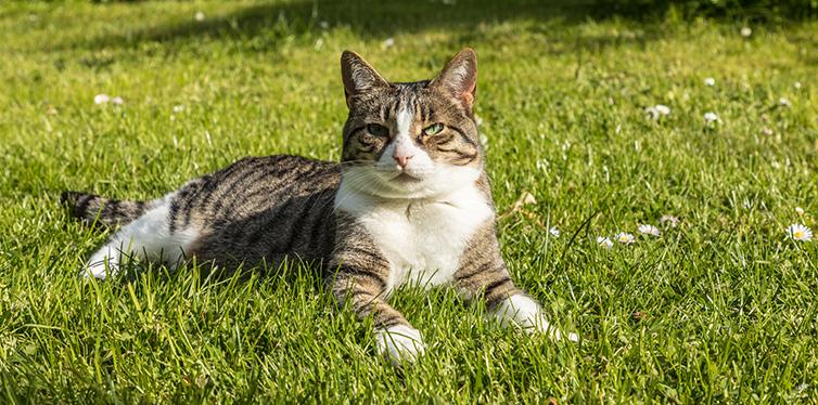 Cute cat enjoys the green grass