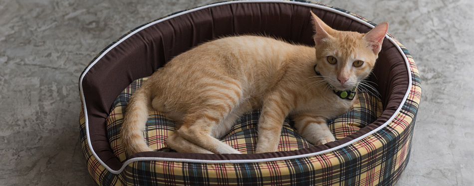 Cute kitty lay dawn in his cozy bed