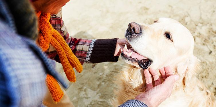 Female cuddling dog