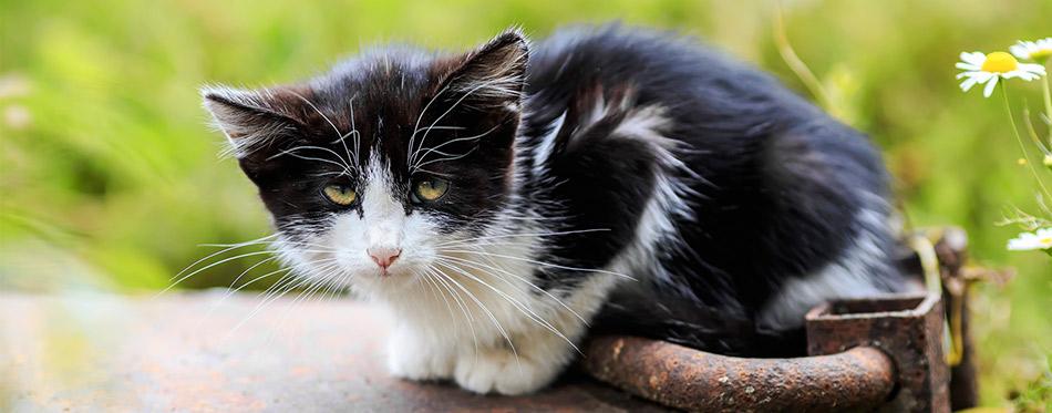 Sad little kitten is sitting alone on the street