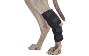 Back-on-Track-Therapeutic-Dog-Leg-Brace-image