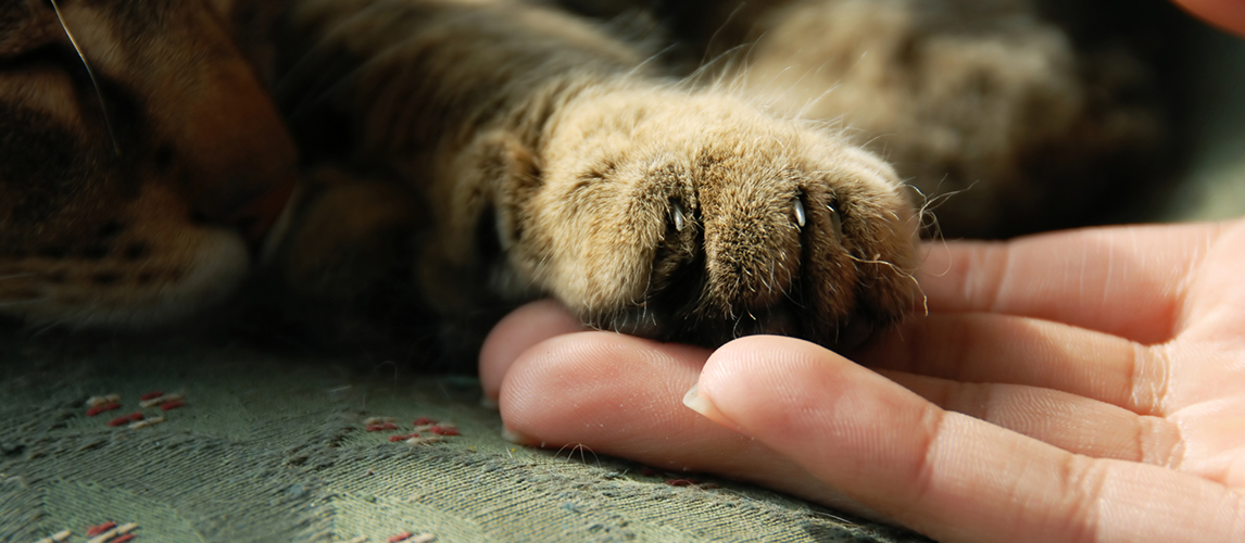 Cat paw on human hand
