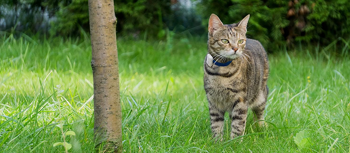 Cat with GPS collar