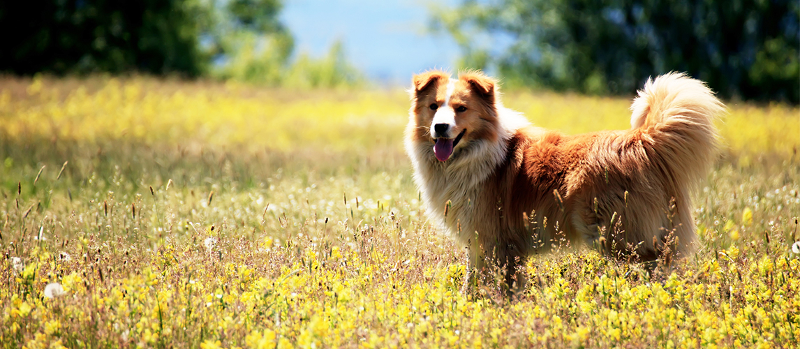 Dog in the field