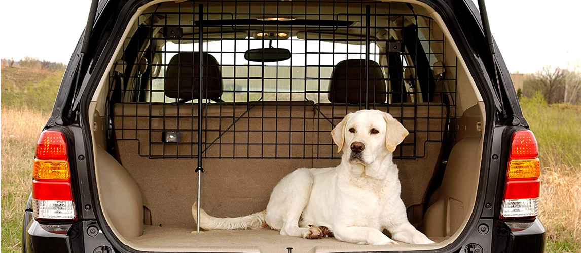 Labrador retriever in a car